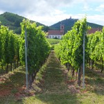 Weinberge in Orchswiller, Alsace, France