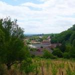 Ribeauvillé, Weinberge
